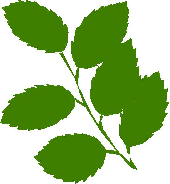 552x598 Green Leaves Clip Art