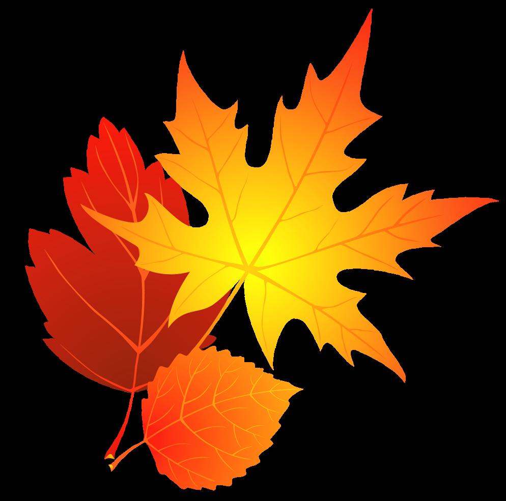 994x985 Maple Leaf Clipart Acorn