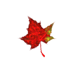 298x267 Fall Leaf Clip Art