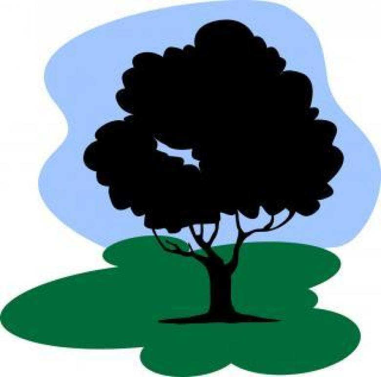 780x772 Tree Under Sky