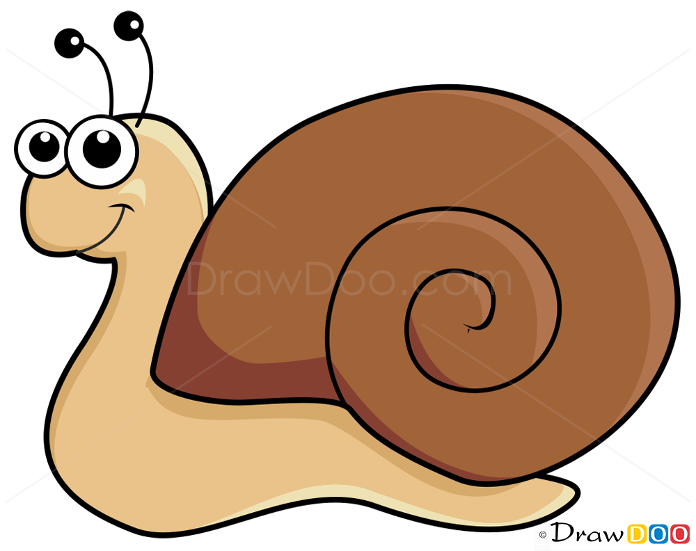 1000x792 How To Draw Snail, Insects