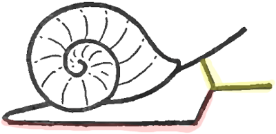 400x194 How To Draw Snails With Simple Step By Step Drawing Instructions