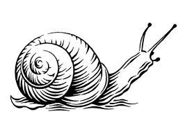 266x190 34 Best Snails Images Black And White, Celebration