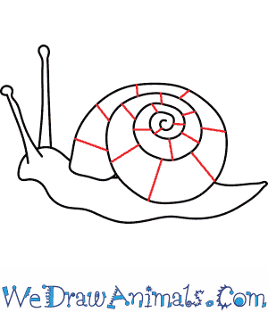 300x350 How To Draw A Snail