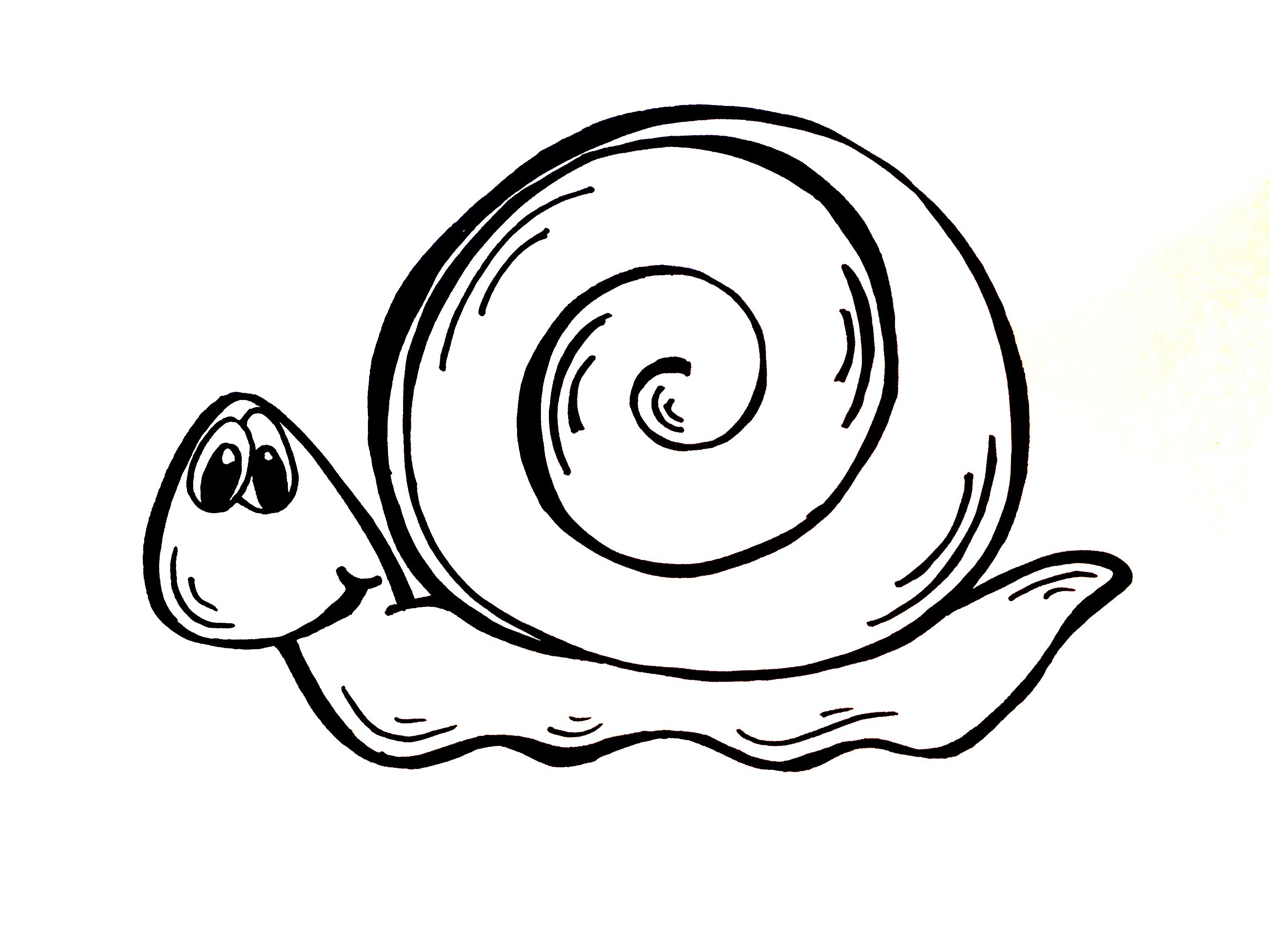 3031x2273 Drawing Of A Snail How To Draw A Snail