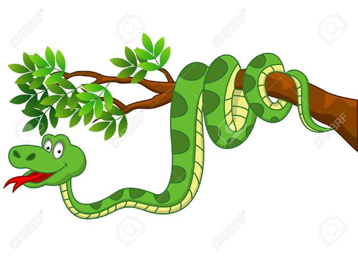 736x568 100 Best Cartoon Snakes Images Snake, Pictures