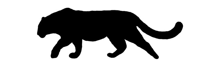 761x235 Amur Leopard Clipart Snow Leopard