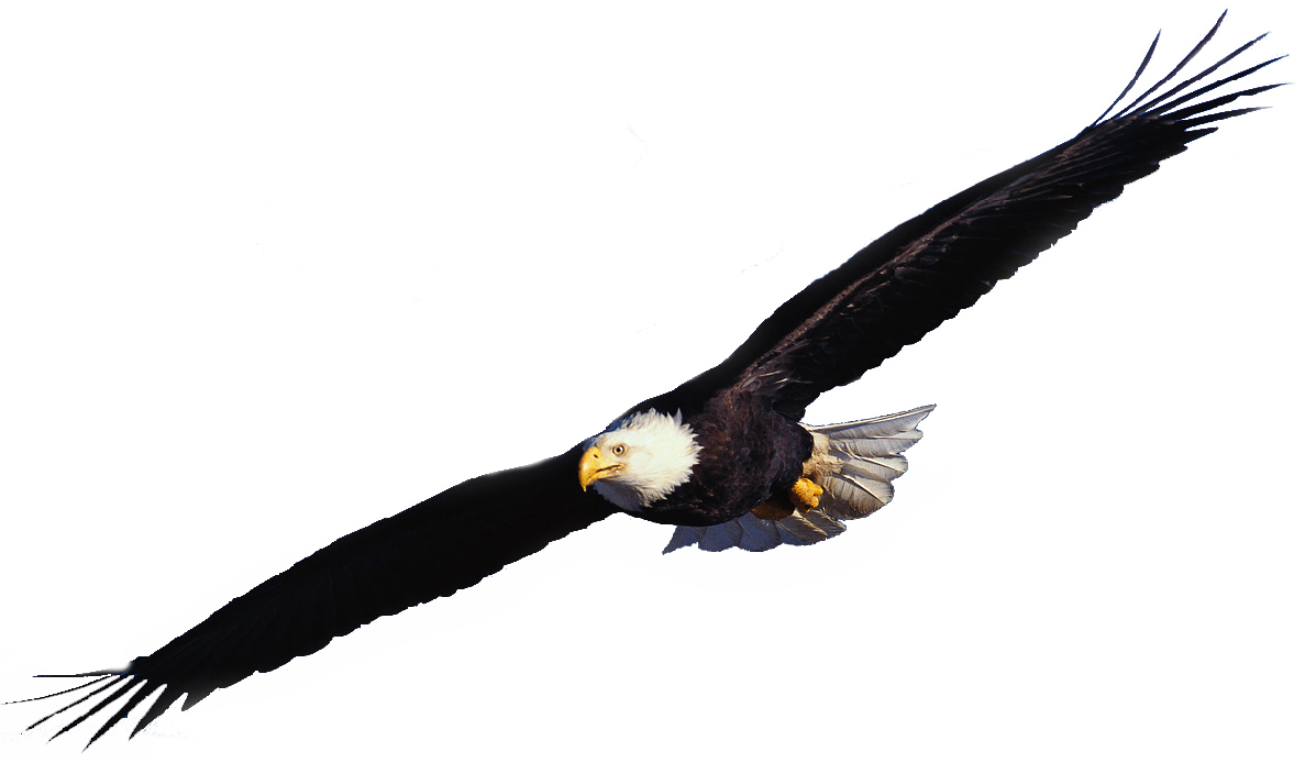 1187x694 Flying Eagle Clipart