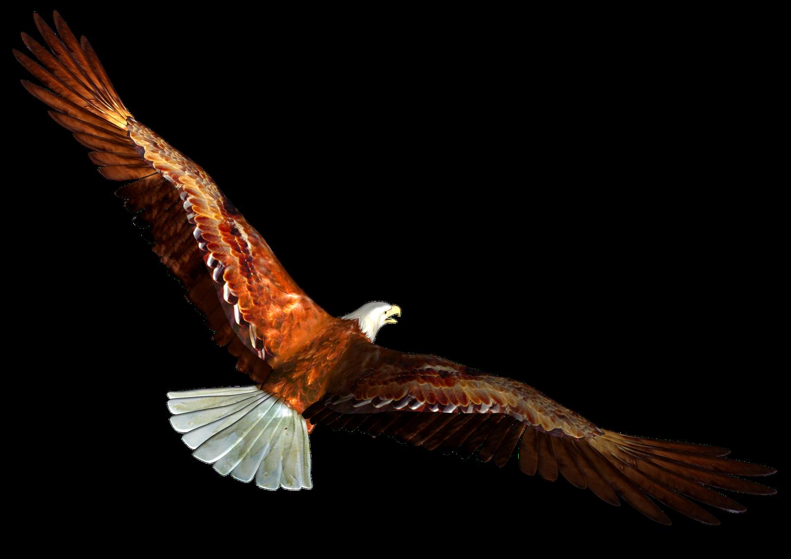 1600x1131 Free Eagle Clipart Image
