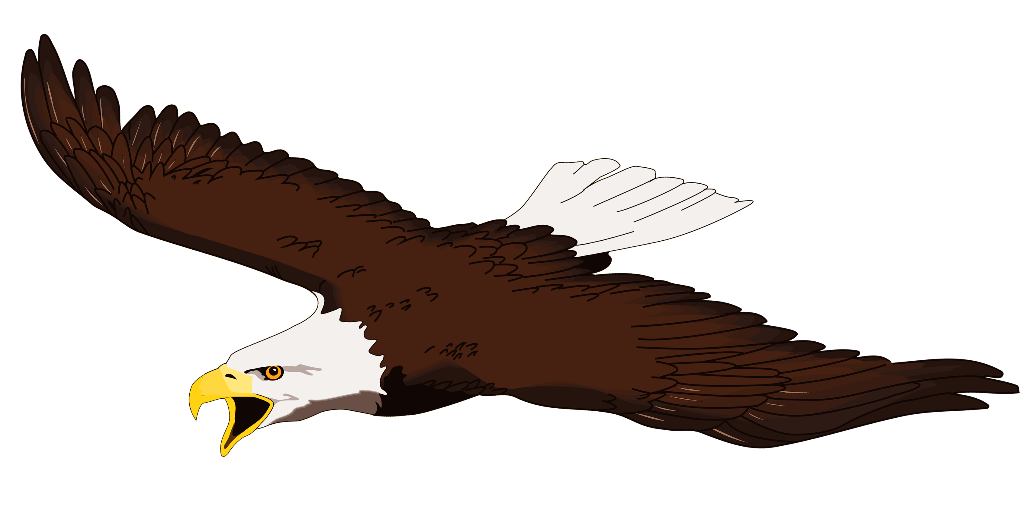 3407x1678 White Tailed Eagle Clipart Soaring Eagle