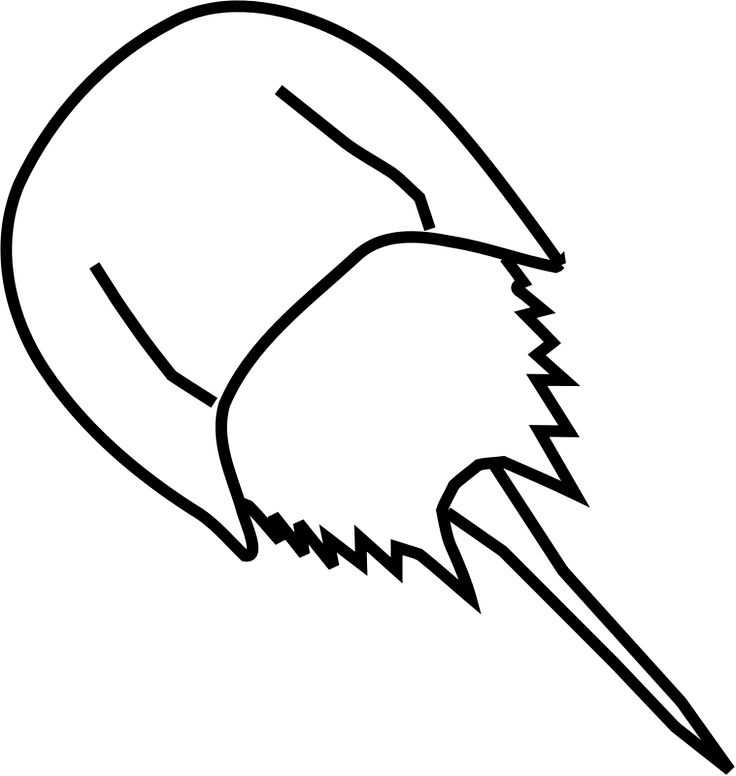 736x776 Horseshoe Crab Clipart