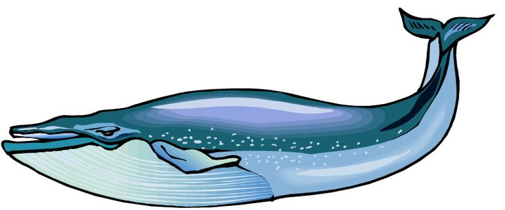 736x307 Blue Whale Clip Art Blue Whale Clip Art Whale Watching Sewing