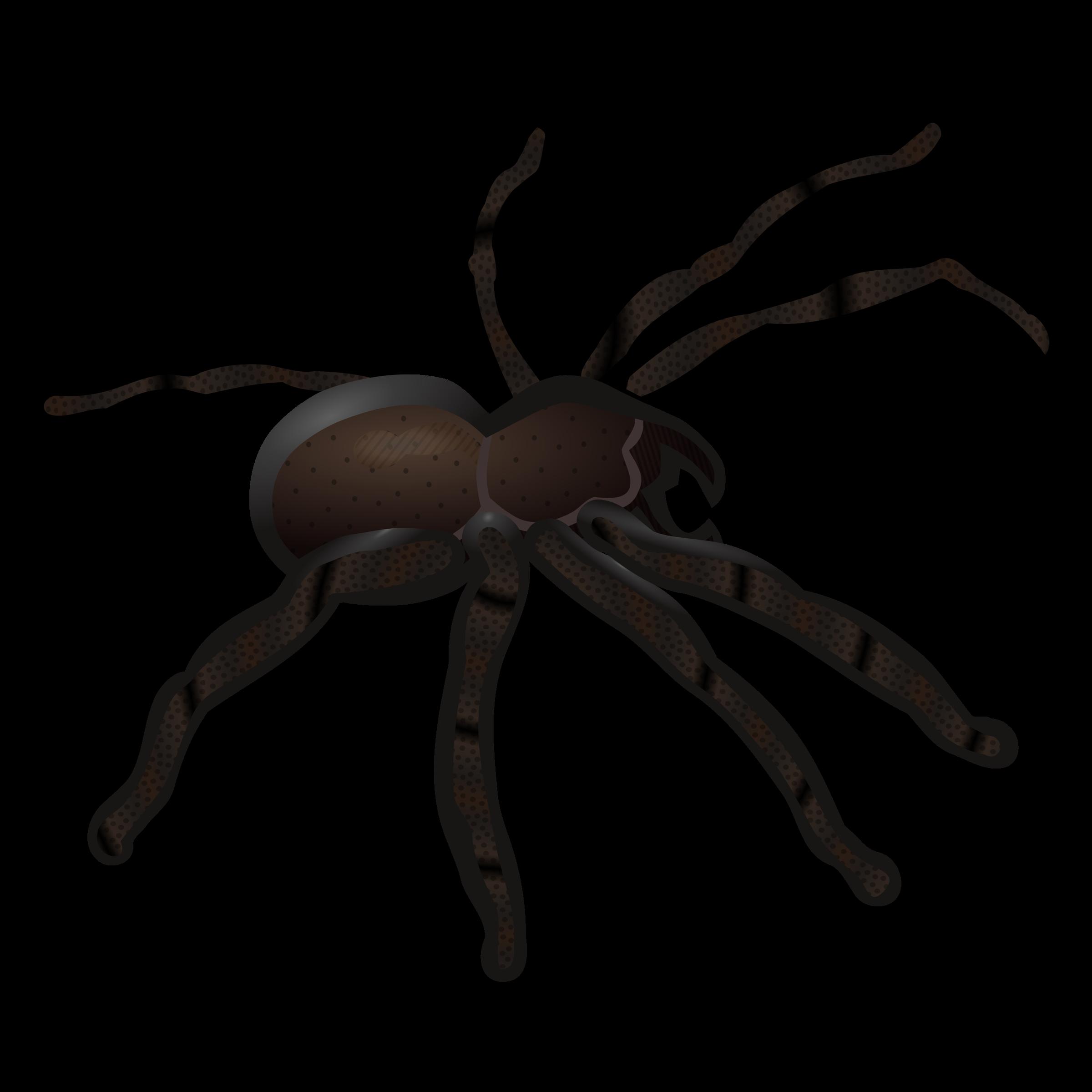 2400x2400 Clip Art Clip Art Spider