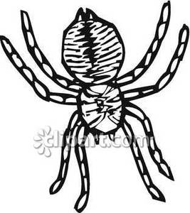 267x300 Black And White Spider