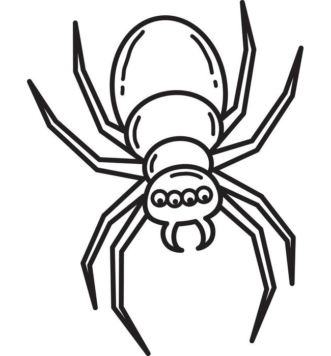 650x700 Sumptuous Design Spider Outline Coloring Pages Printable Drawing