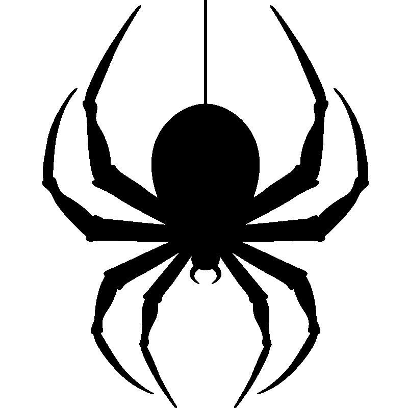 800x800 Hanging Spider Png Transparent Image Png Mart
