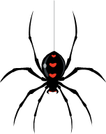 152x191 Bob's Basement All Spiders Must Die