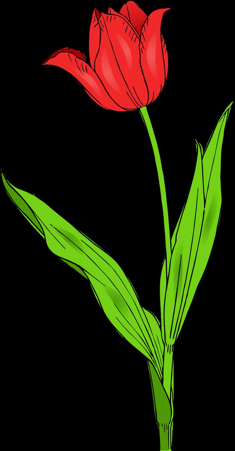 800x1534 Top 81 Flowers Clip Art