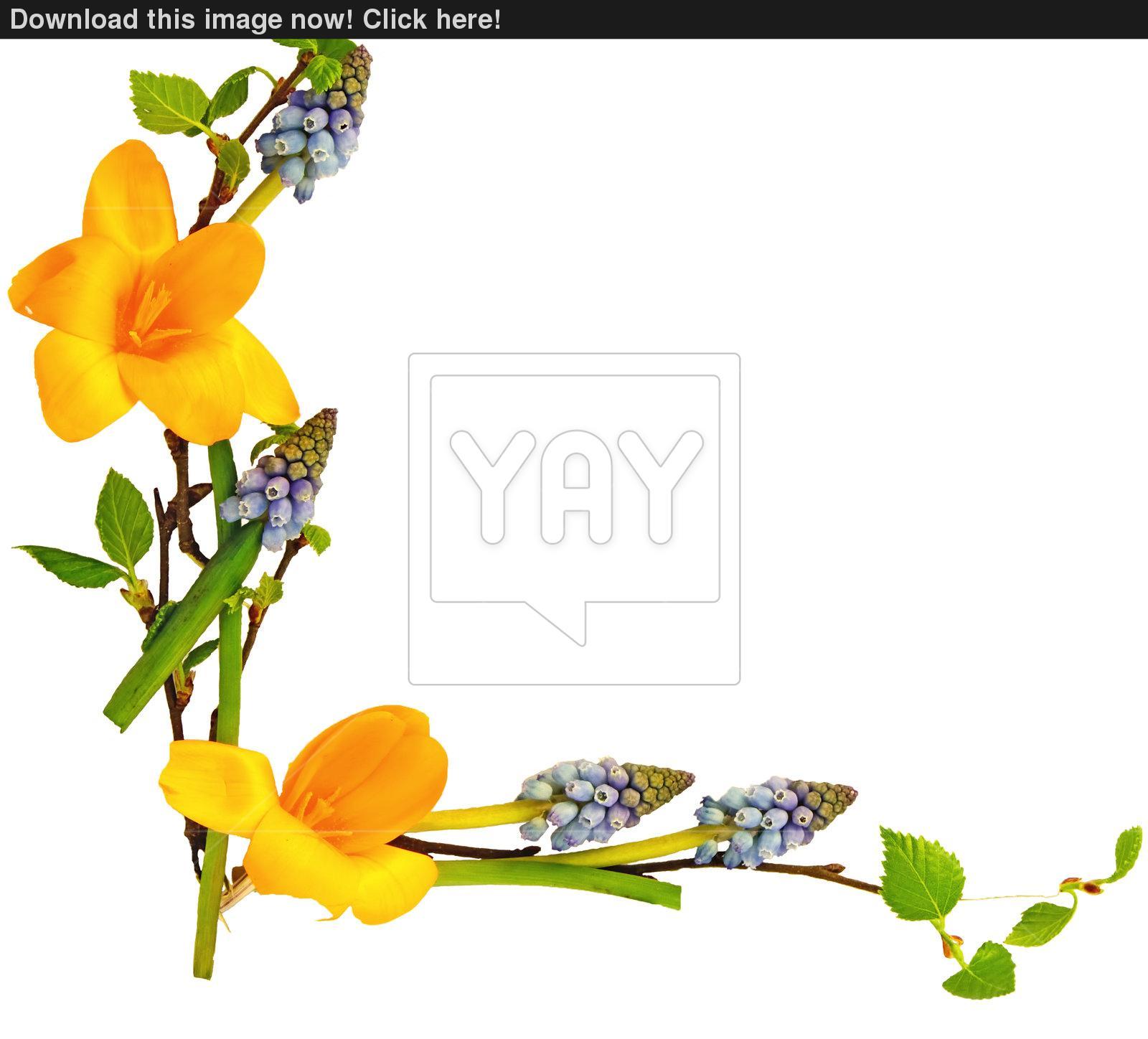 Spring Flower Border Free Download Best Spring Flower Border On