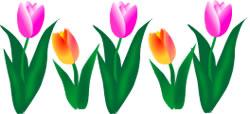 250x114 Spring Flower Border Clipart