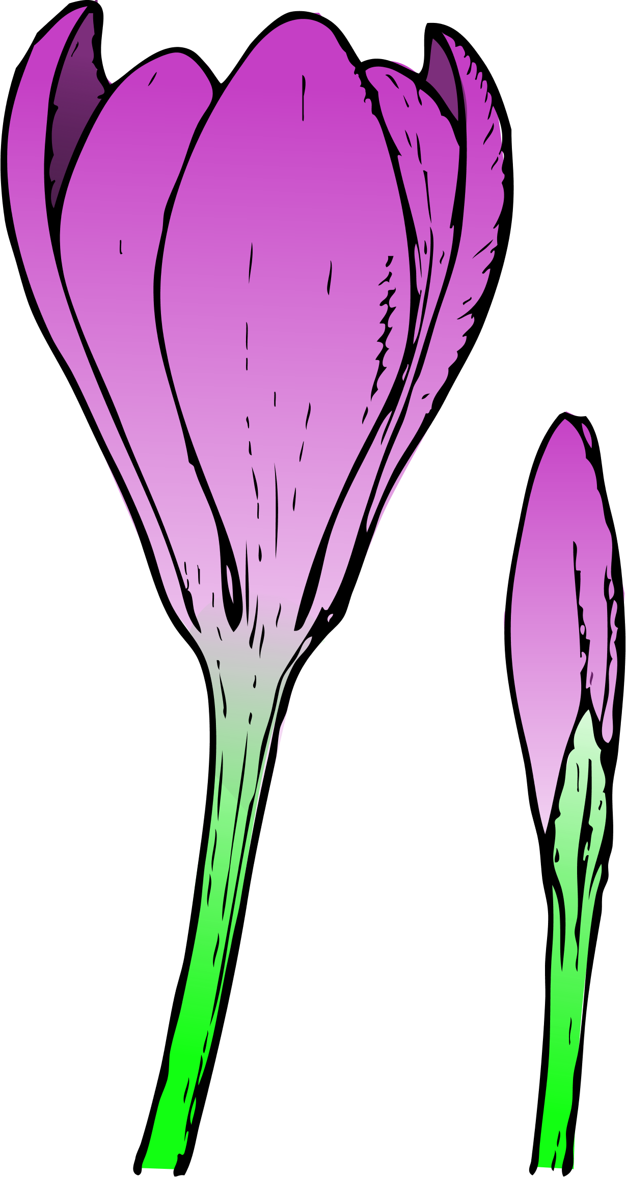 1229x2311 Spring Flowers Spring Flower Clip Art Images Clipart