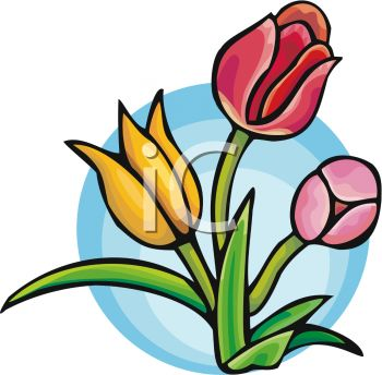 350x344 Colorful Tulip Flowers