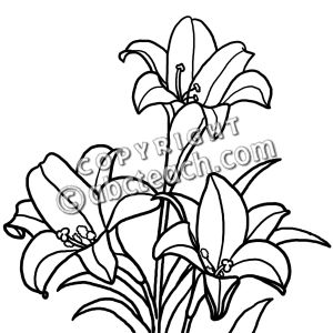 300x300 Flowering Plants Clipart Black And White