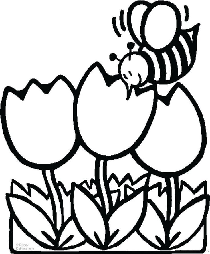 736x890 Tulip Clipart Coloring Page