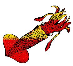 234x213 Squid Cliparts Public Domain