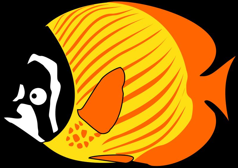 800x566 Squid Clipart Foca
