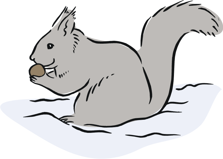 750x535 Squirrel Black And White Free Squirrel Clipart