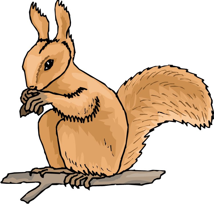 750x718 Animated Squirrel Clipart Free Squirrel Clipart Clipart Kid