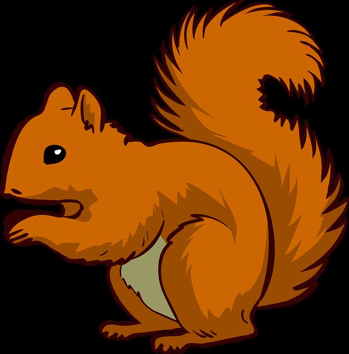 709x720 Eat Squirrel Clipart, Explore Pictures