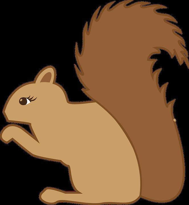 663x720 Squirrel Clipart Hibernation