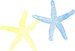 300x207 Blue And Yellow Starfish Clip Art
