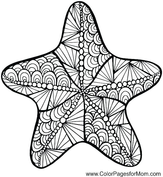 Starfish Drawing | Free download best Starfish Drawing on ...