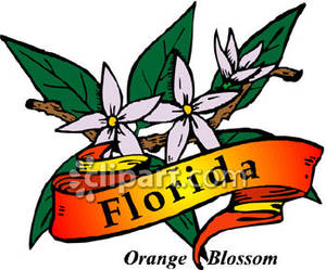 300x249 State Flower Of Florida, The Orange Blossom Royalty Free Clipart