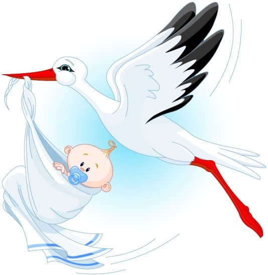 534x548 Stork Carrying A Baby Vector Free Vector In Encapsulated