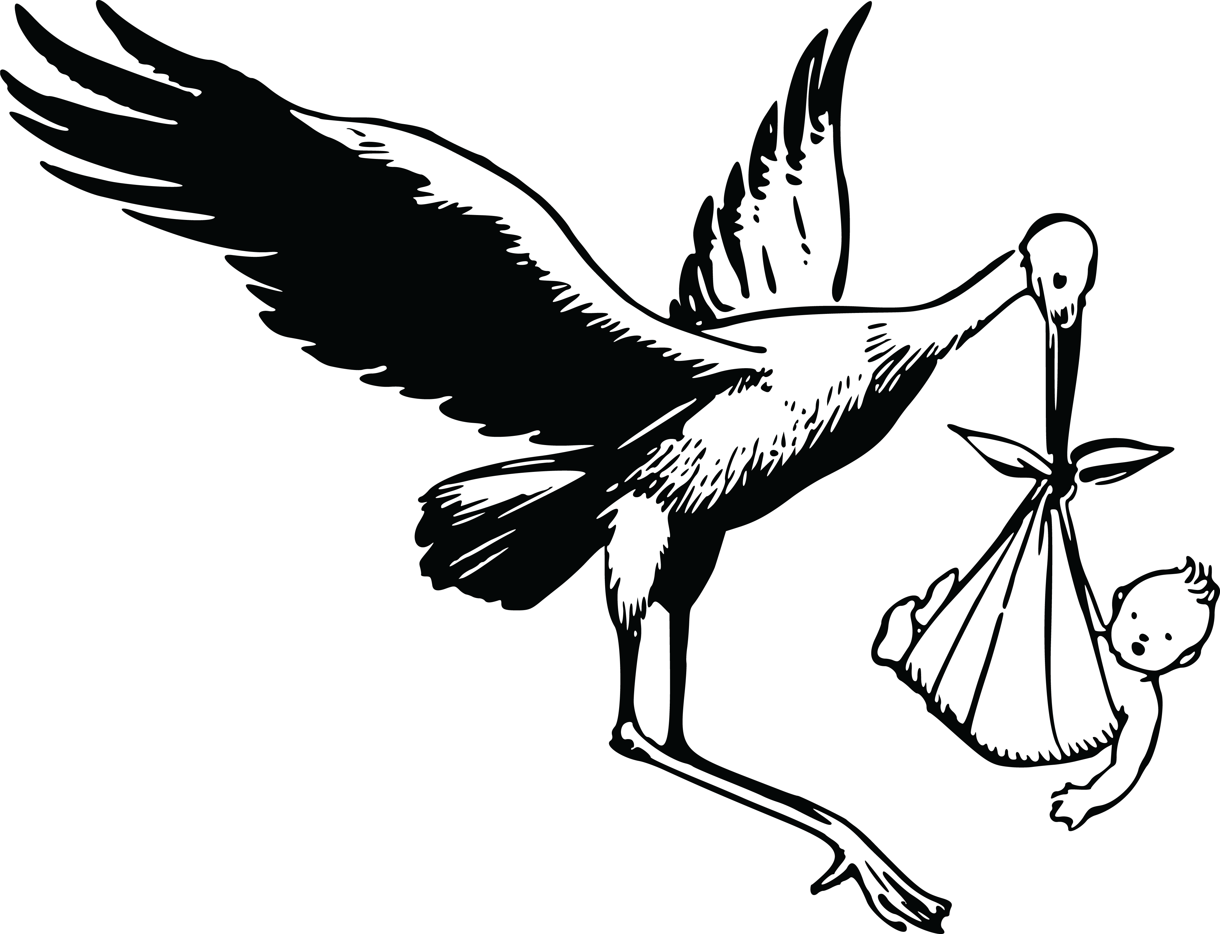 4000x3062 Free Clipart Of A Stork And Baby