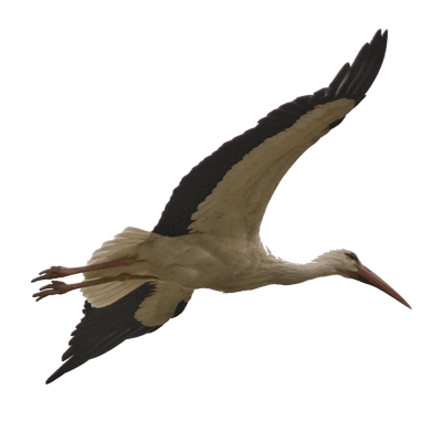 400x400 Stork Bird Transparent Image