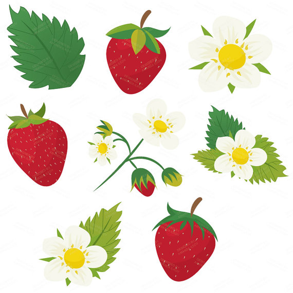 570x570 Premium Strawberry Clip Art Amp Strawberry Digital Papers Set