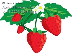 300x224 Art Illustration Of A Bunch Of Strawberries Growing On A Plant
