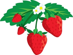 300x224 Strawberry Clipart Border Free Images 2