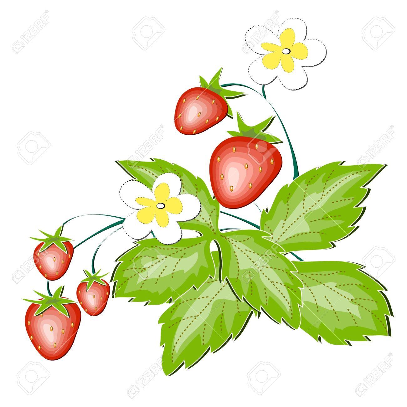 1300x1300 Wild Strawberry Clipart
