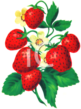 259x350 Royalty Free Strawberry Clip Art, Farm Produce Clipart