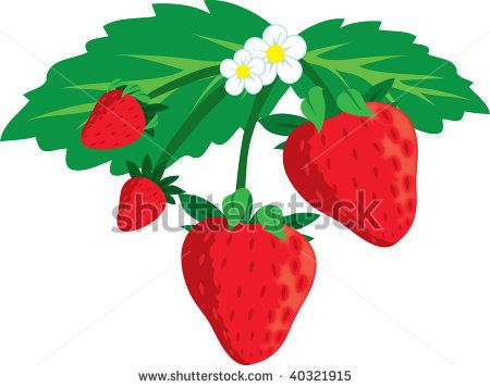 450x356 Branch Clipart Strawberry