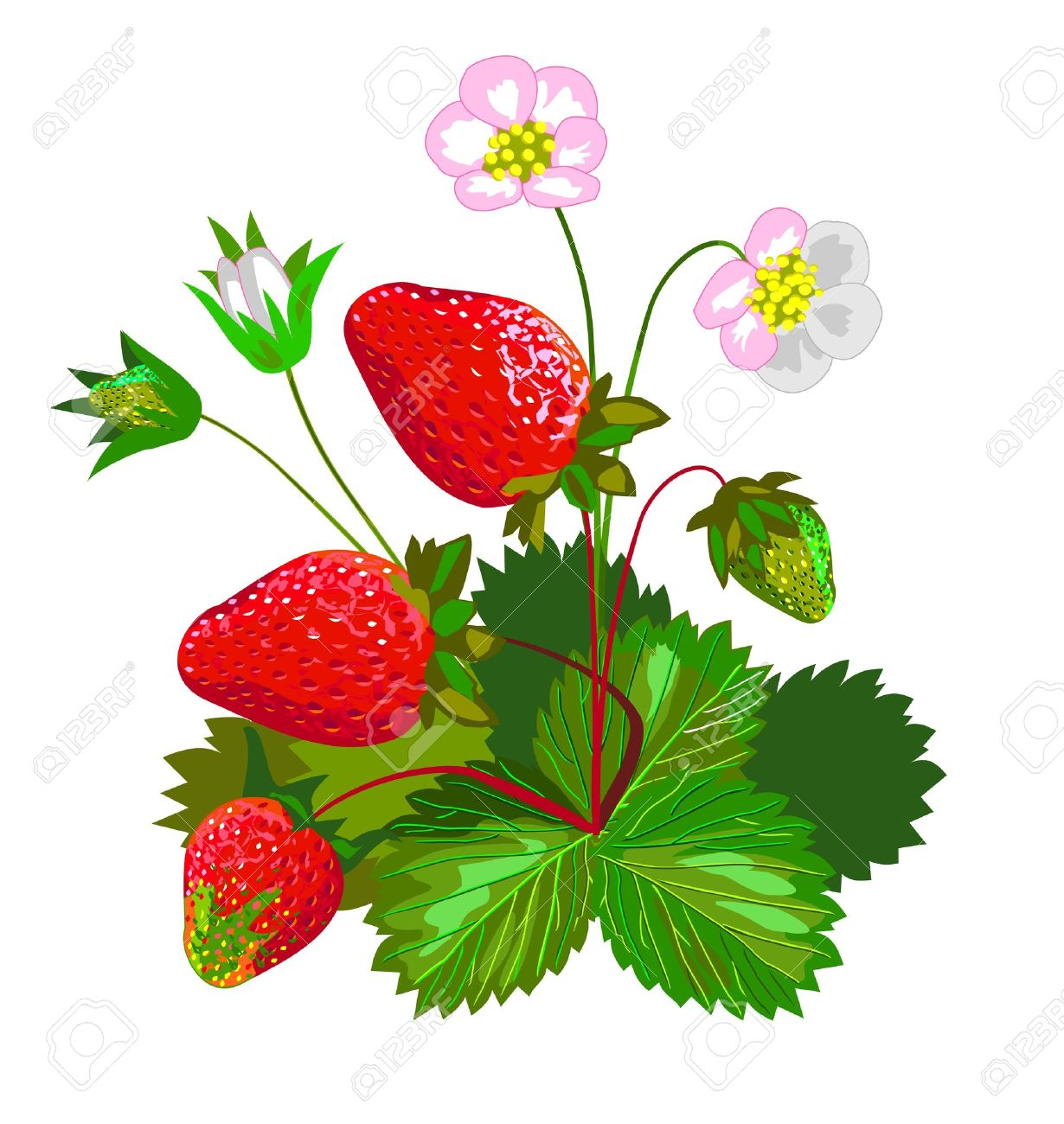 1230x1300 Images Strawberry Plant Clipart