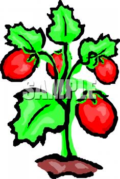 235x350 Strawberry Vine Clipart