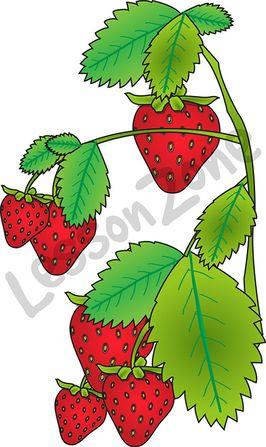 266x447 Branch Clipart Strawberry