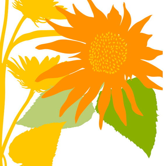570x570 Orange Flower Clipart Summer Flower